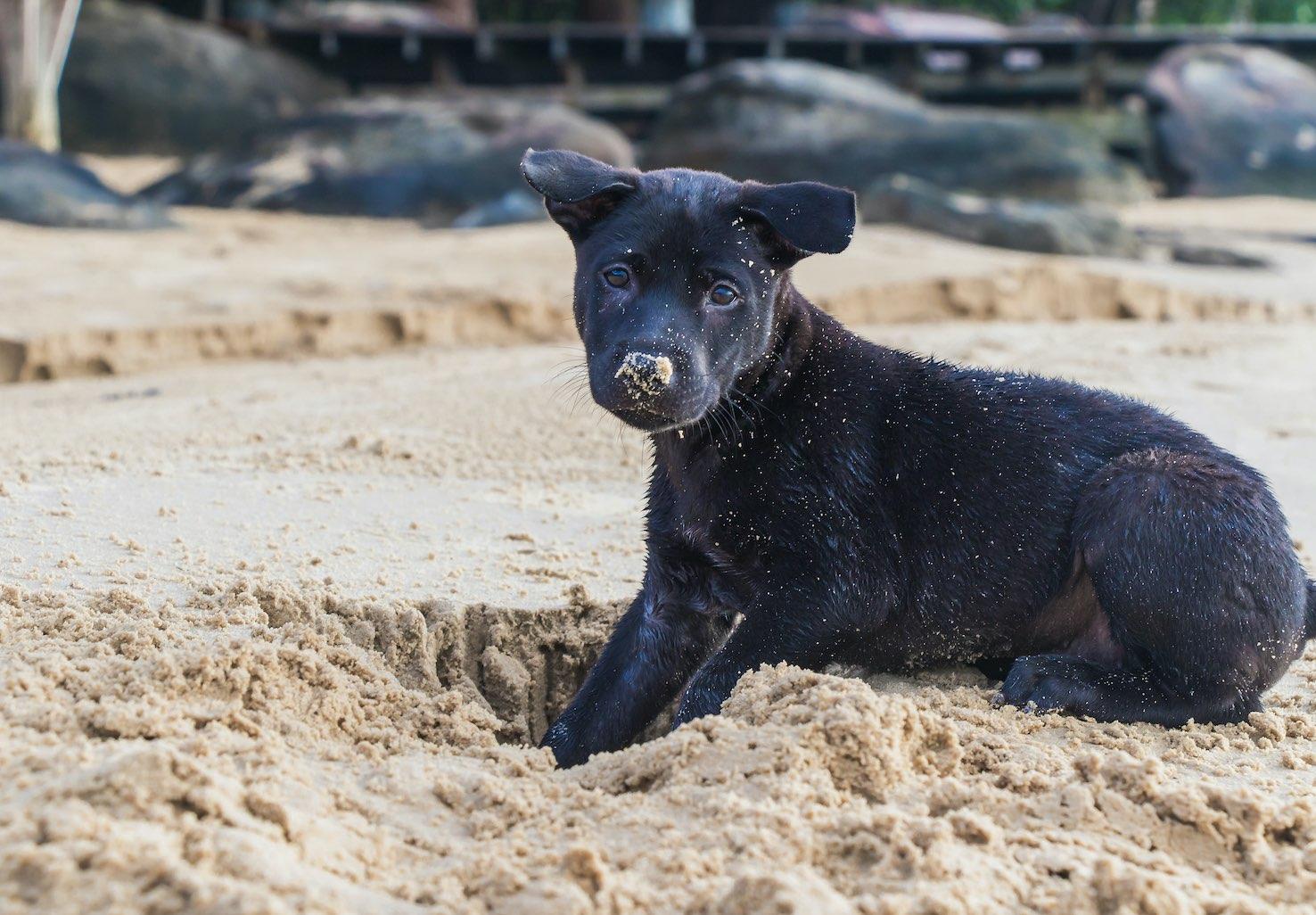 Antigua Dog Adoption
