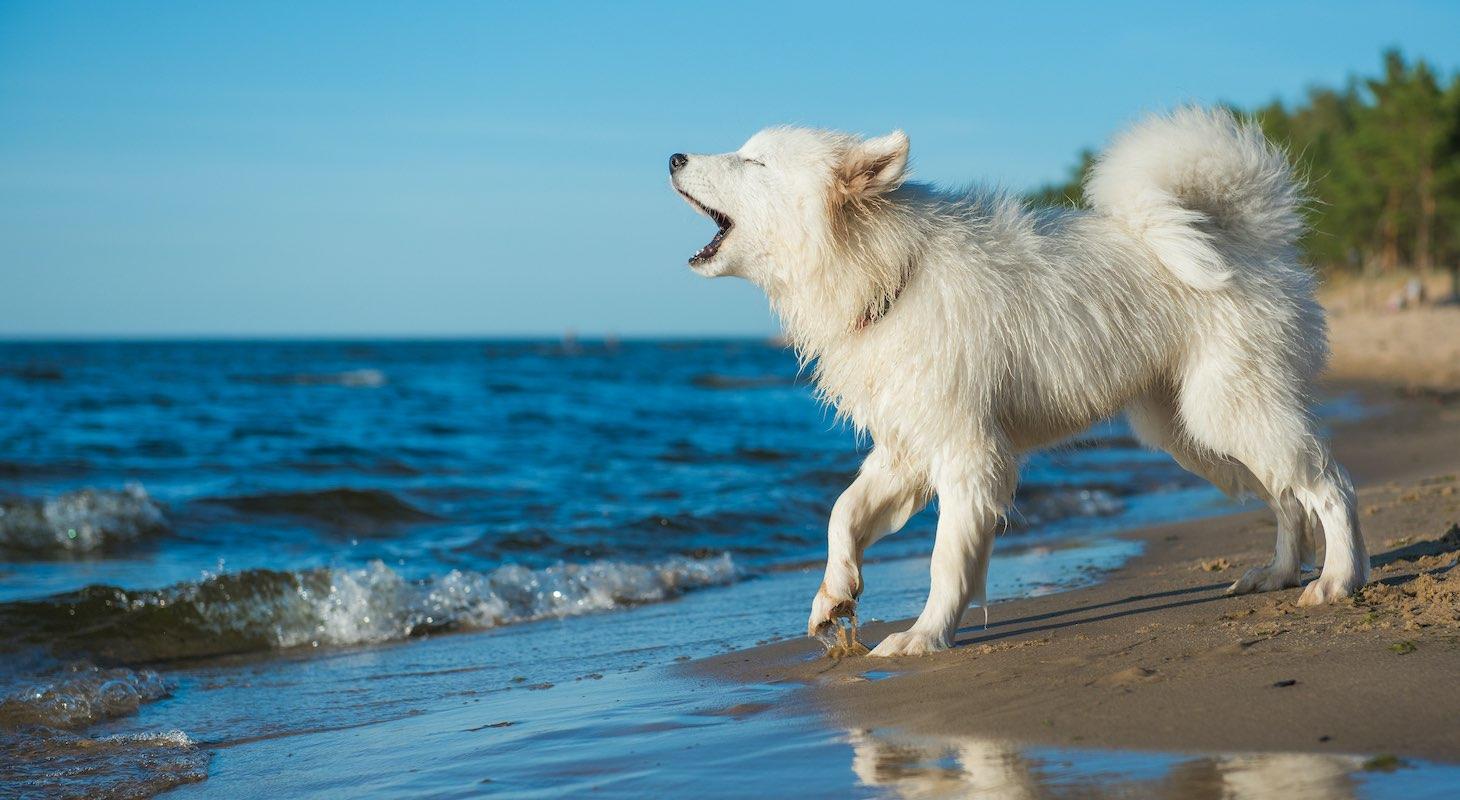 Dog for Adoption in Antigua