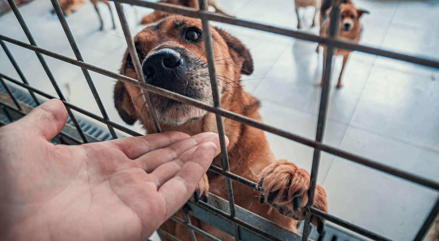 Raise Money for Antiguan Dogs
