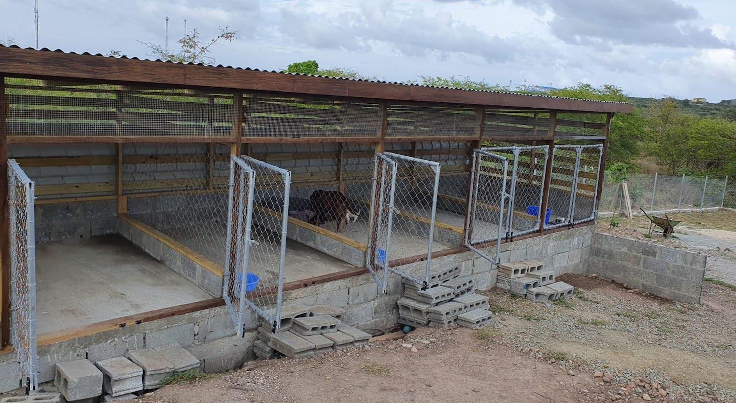 Antigua dog and cat sanctuary
